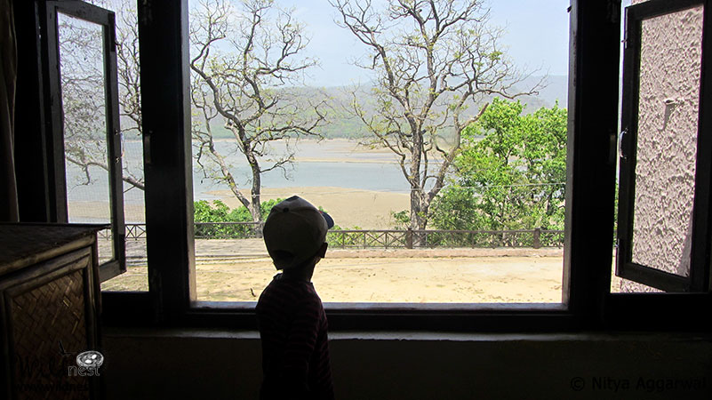 Blog: Trip to Corbett - A nature's tale