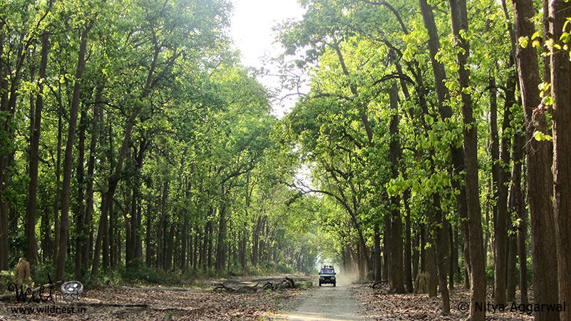 Blog:Trip to Corbett - A nature's tale