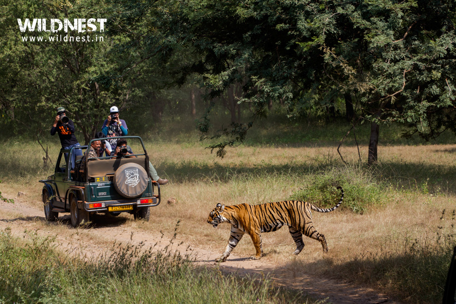 Wildlife Safari at Ranthambore. Know more about Ranthambore