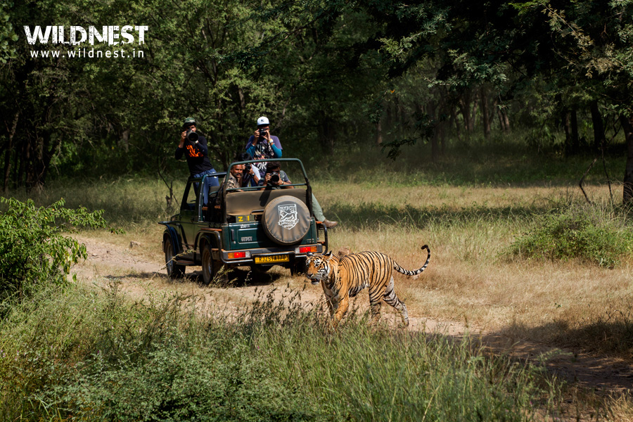 gypsy safari at ranthambore national park