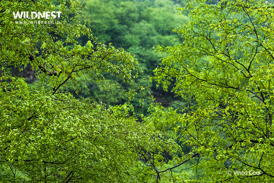 Sariska Tiger Reserve trip during monsoons