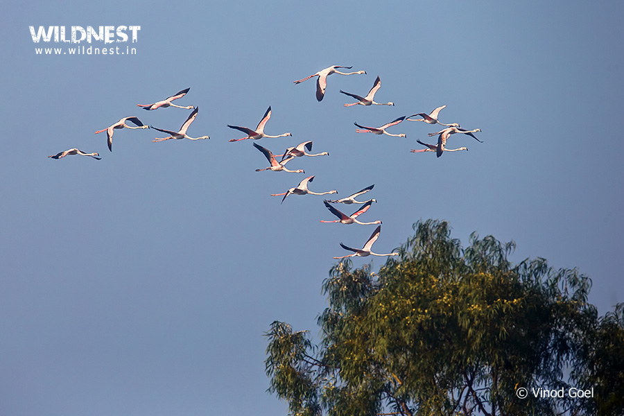Birding Near Delhi at Dighal Wetlands
