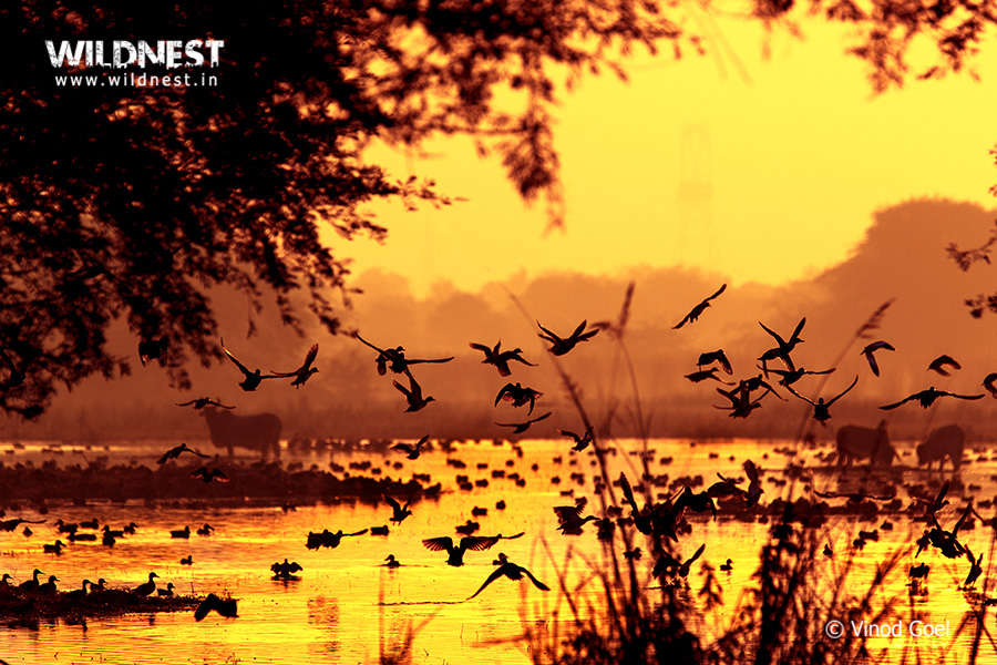 Birding Near Delhi at Sultanpur National Park
